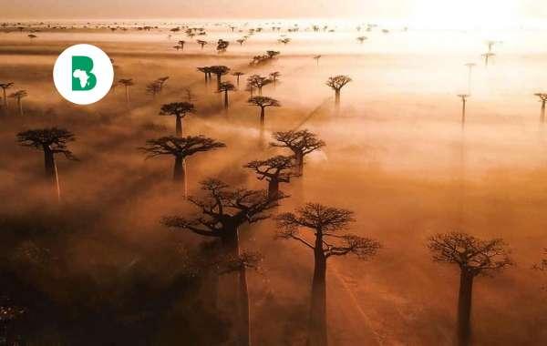 Listes des plus grandes et puissantes ethnies d'Afrique