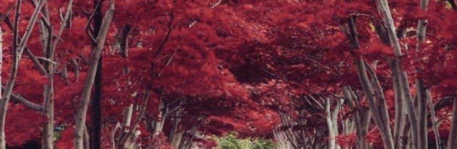 Zhenzhu Cover Image