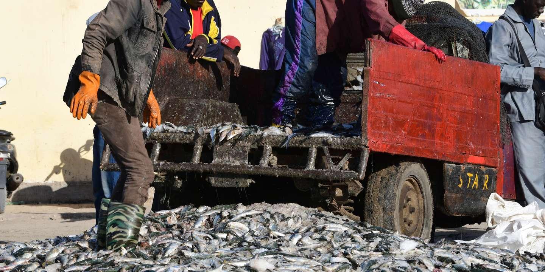 L'exportation des farines et huiles de poisson menace la sécurité alimentaire des Africains