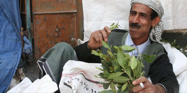 Sur les chemins globalisés du khat, cette «amphétamine» de la Corne de l'Afrique