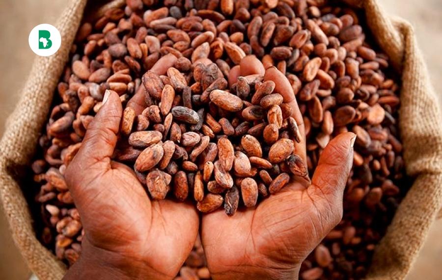 Voici pourquoi l'Afrique produit 75% du cacao mondial et n'obtient que 2% de l'industrie de 100 milliards