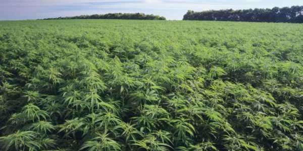 Les autorités marocaines saisissent 3 tonnes de cannabis
